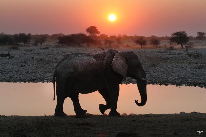 Afrika 3D - Kontinent der Wunder [3D Blu-ray]