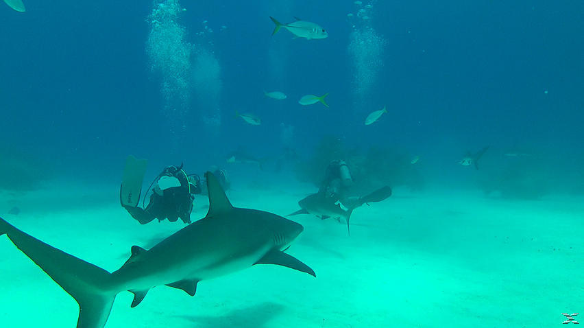 Abenteuer Karibik 3D - Tauchen mit den Haien [3D Blu-ray]