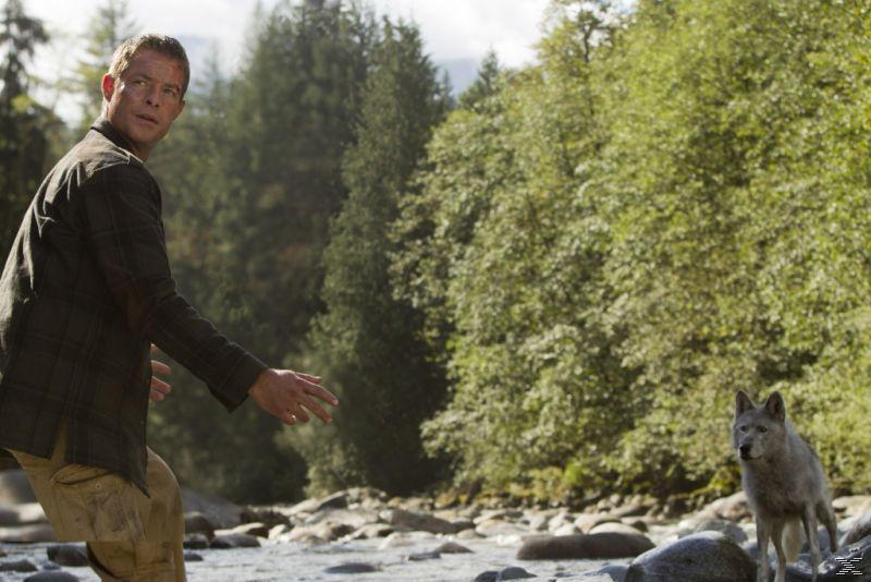 Crash Site - Lost in Wilderness - (Blu-ray)