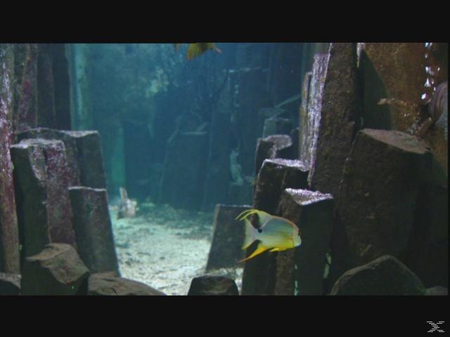 AQUARIUM-ZAUBERHAFTE UNTERWASSERWELTEN - (DVD)