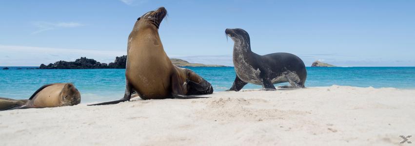 Galapagos 3D - (3D Blu-ray)