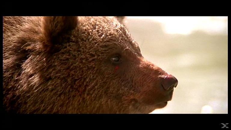 Der Bär - (Blu-ray)