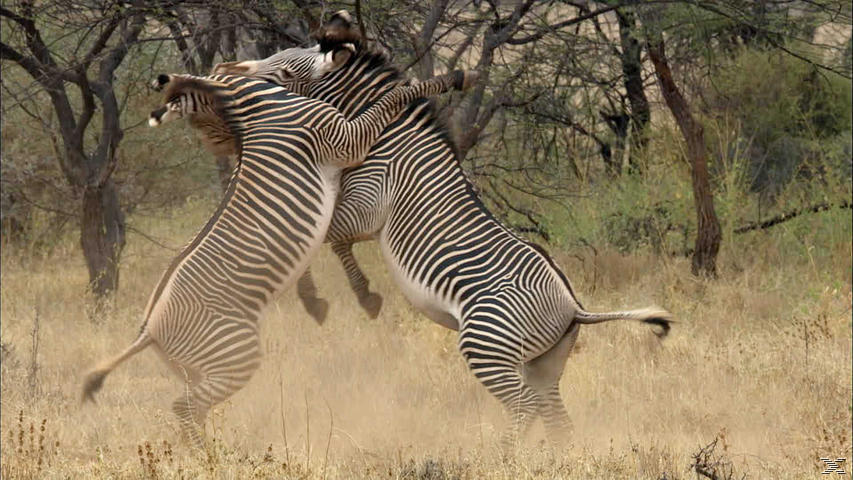 Unbekanntes Afrika - (DVD)