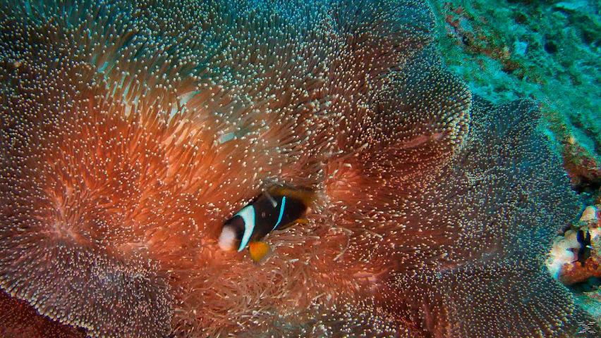 Wunderwelt Unterwasser 3D - Dive - Limited Edition - (3D Blu-ray)