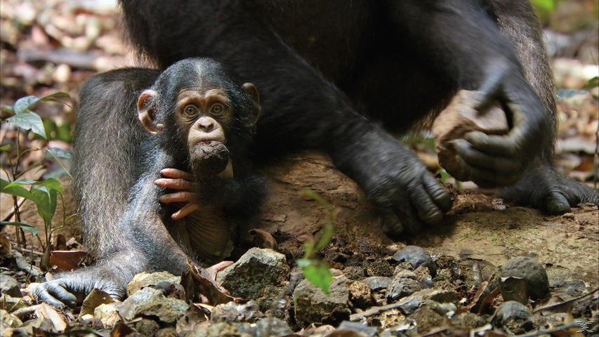 Schimpansen - (Blu-ray)