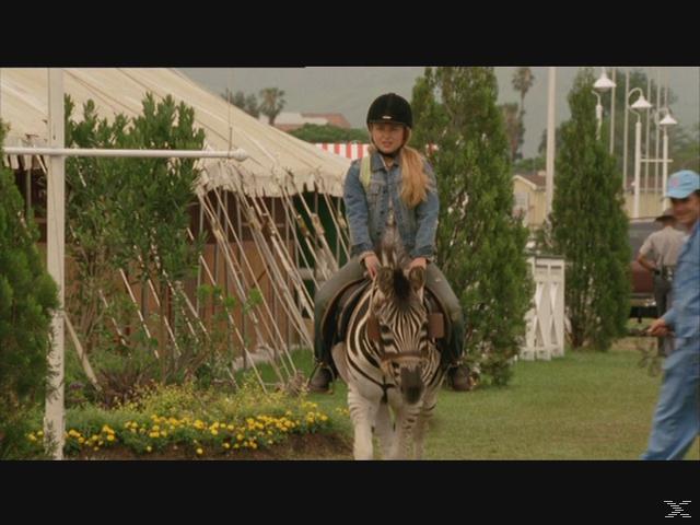 STRIPES - EIN ZEBRA IM RENNSTALL/IM RENNSTALL IST [DVD]