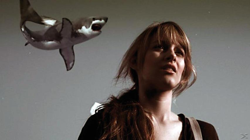 Shark Box XXL - (Blu-ray)
