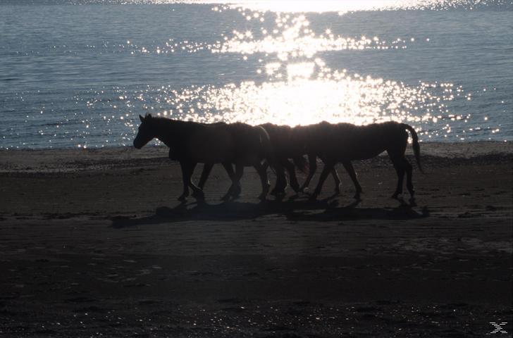 Die Pferde des Himmels [DVD]