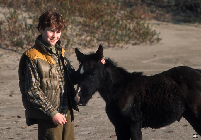 Mein Freund Shadow + Die Pferde des Himmels - (DVD)