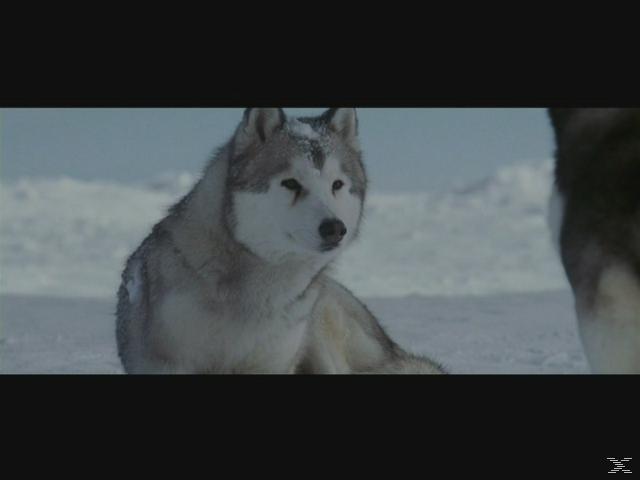 Antarctica: Gefangen im Eis - (DVD)