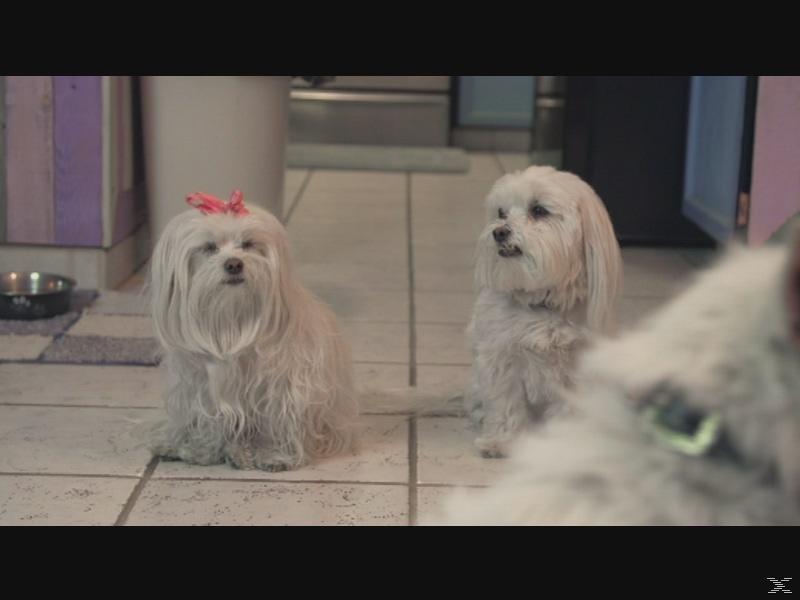 Die drei Hundketiere retten Weihnachten [DVD]