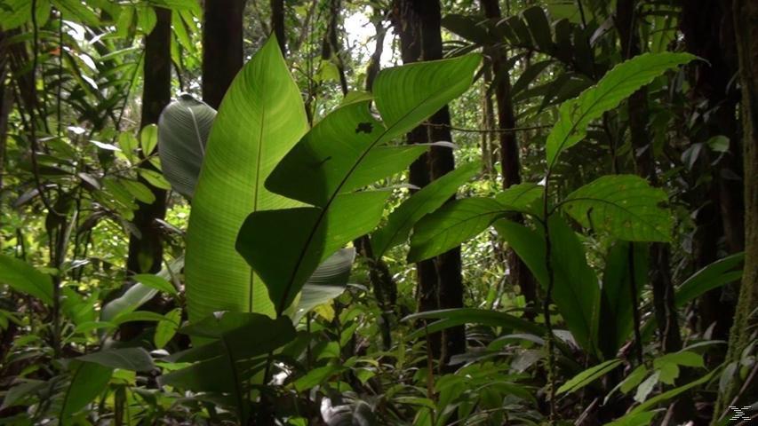 Der Dschungel 3D - Zauber einer anderen Welt - (3D Blu-ray)