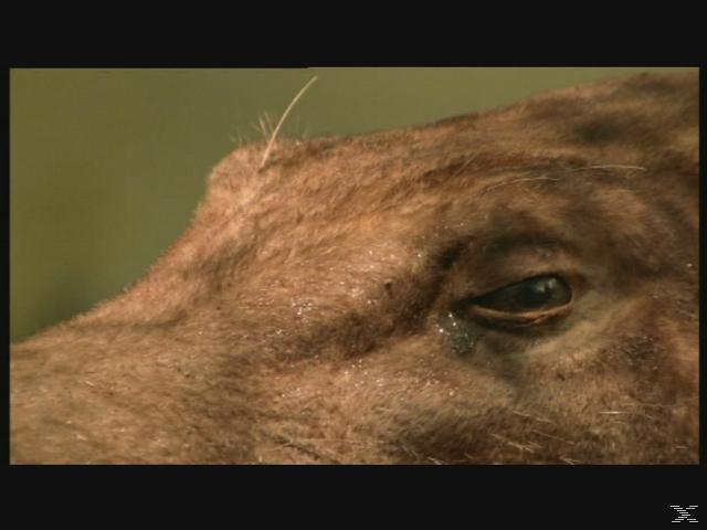 Die Erben der Saurier: Im Reich der Urzeit - Die komplette Serie - (DVD)