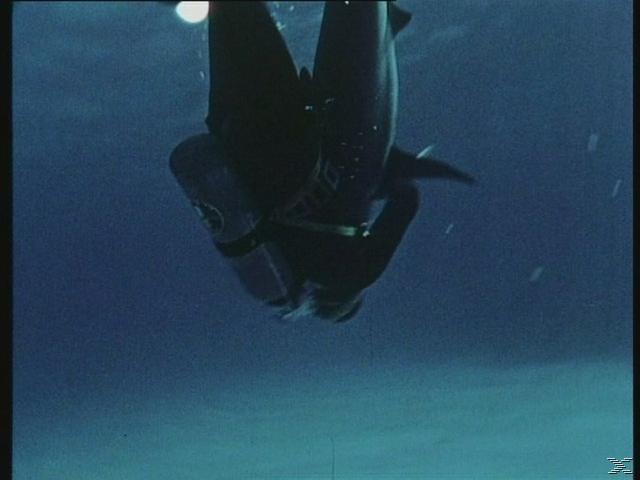 Samuel Fuller's Shark [DVD]