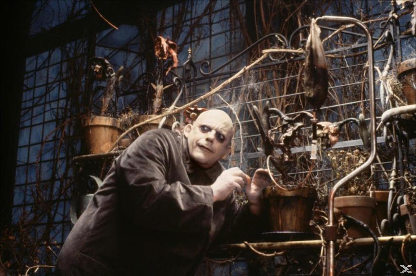 Die Addams Family [DVD]