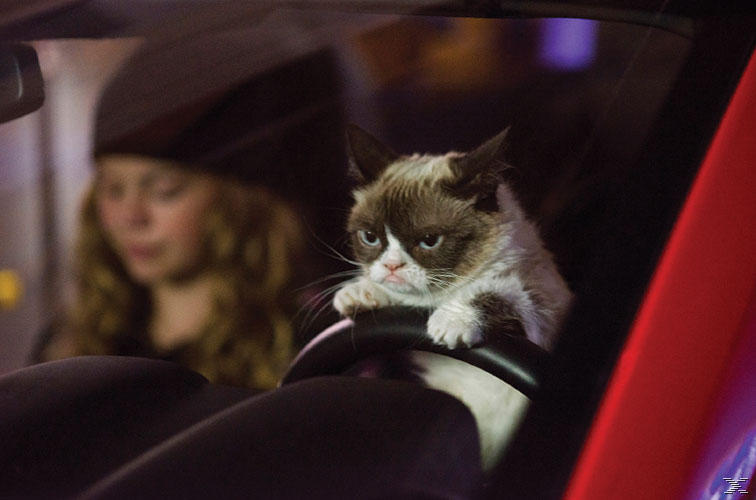 Grumpy Cat's miesestes Weihnachtsfest ever - (DVD)