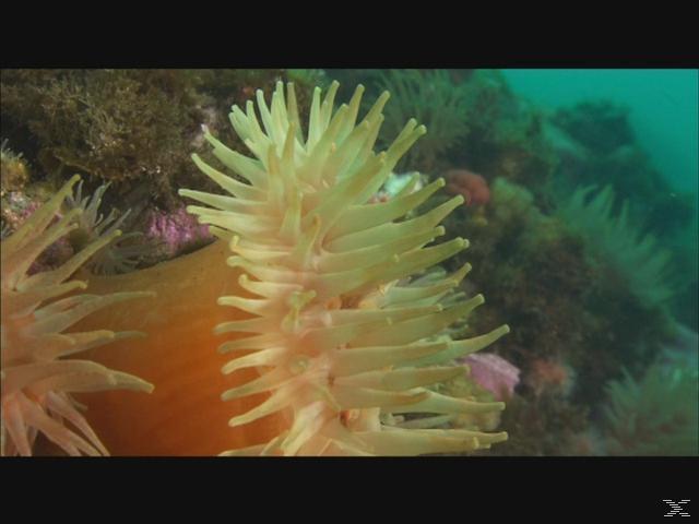 Oceans - Geheimnisvolle Tiefen - (DVD)