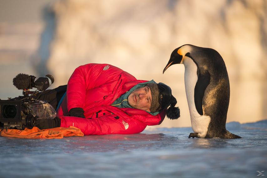 Die Reise der Pinguine 2 - Der Weg des Lebens - (4K Ultra HD Blu-ray + Blu-ray)