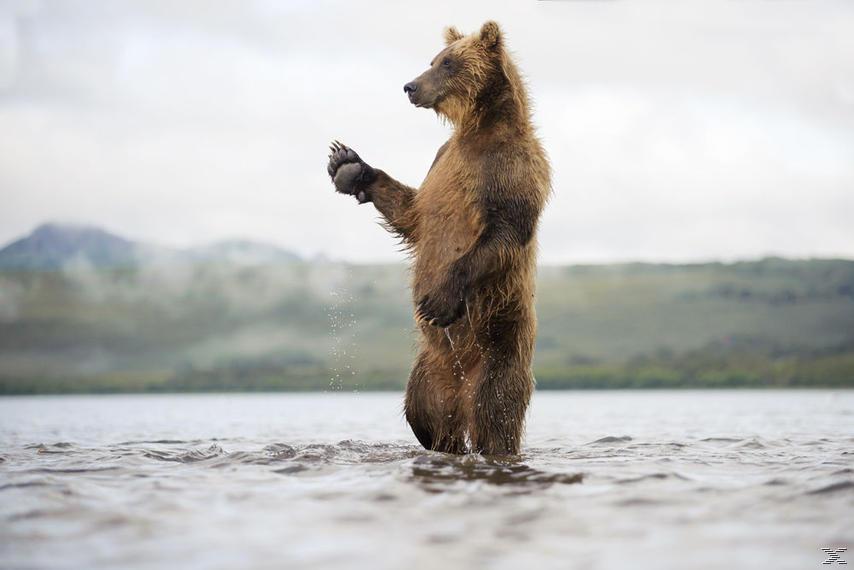 Im Land Der Bären 3D/2D [3D Blu-ray (+2D)]
