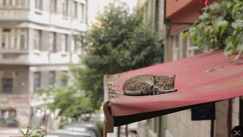 Kedi - Von Katzen und Menschen - (Blu-ray)