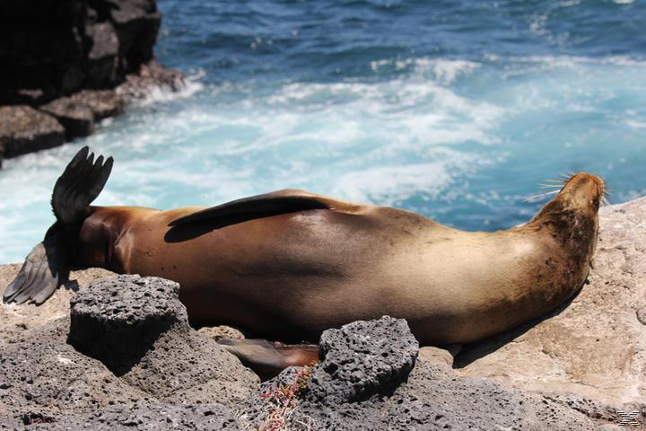 Faszination Galapagos 3D - Südamerika - (3D Blu-ray)