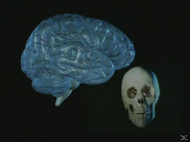 Der Körper des Menschen - Teil 06 - (DVD)