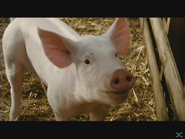 Schweinchen Wilbur und seine Freunde - (DVD)