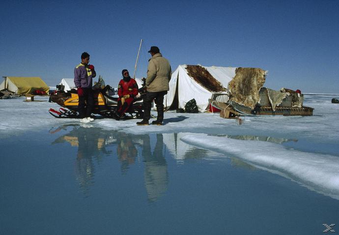 Königreich Arktis - (Blu-ray)