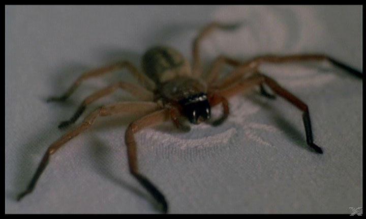 Arachnophobia - (DVD)