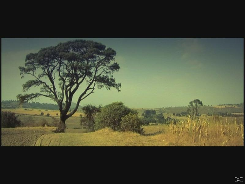 Steven Wilson - Insurgentes - (DVD)