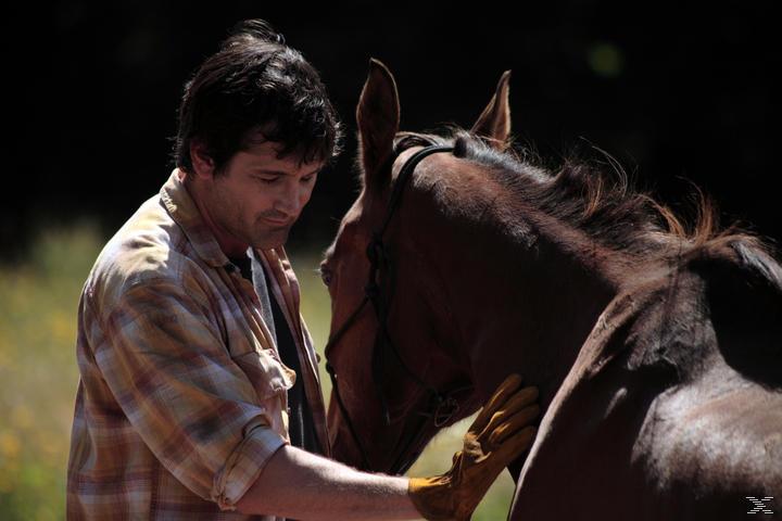 Die Insel der Pferde - (DVD)