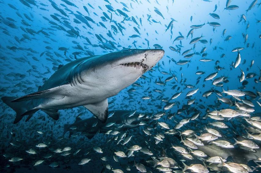 Die Welt der Haie - (Blu-ray)