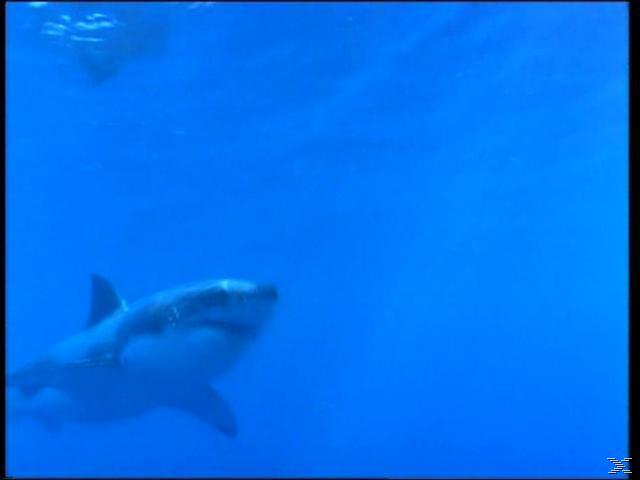 Was ist was - Haie [DVD]