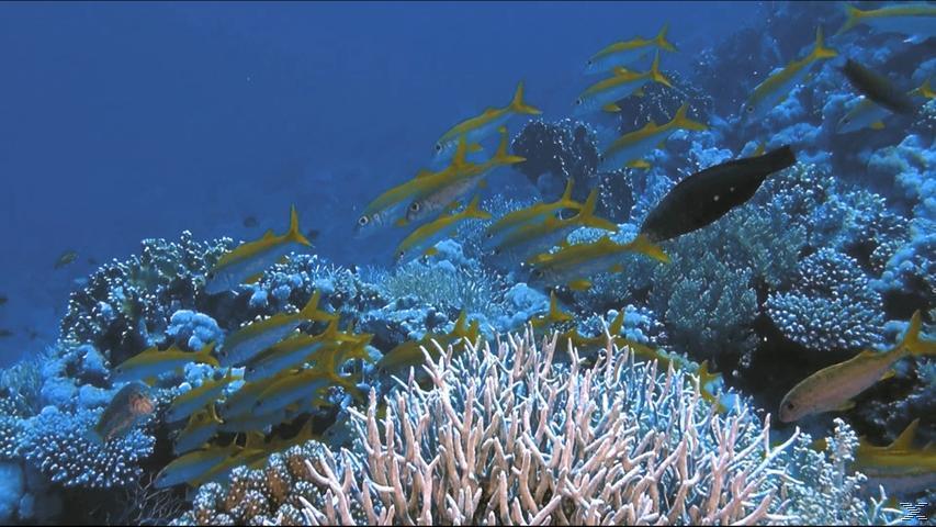 Faszination Korallenriff - Jäger und Gejagte - (3D Blu-ray)