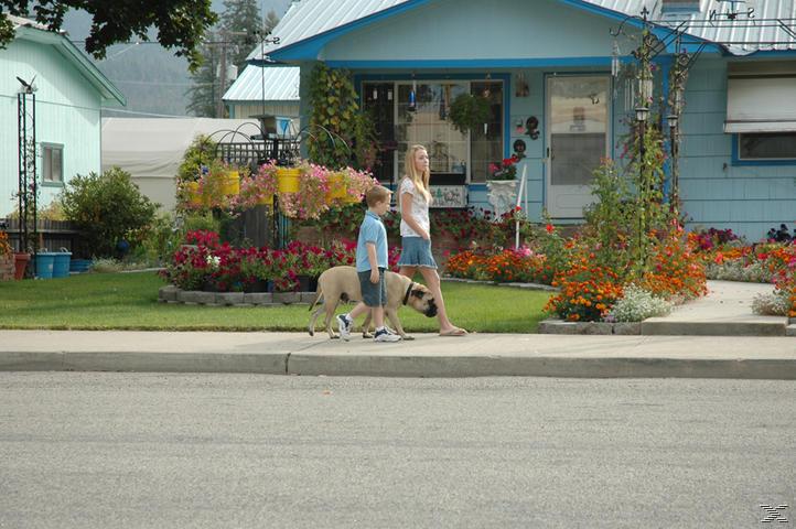 Chaos auf 4 Pfoten - Sommer mit Hund - (DVD)