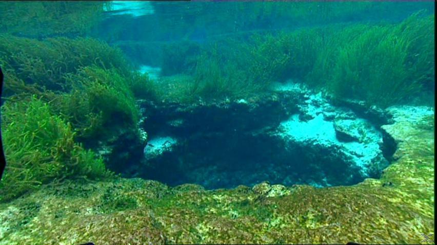Die letzten Paradiese - Flusswelt der Seekühe - (DVD)