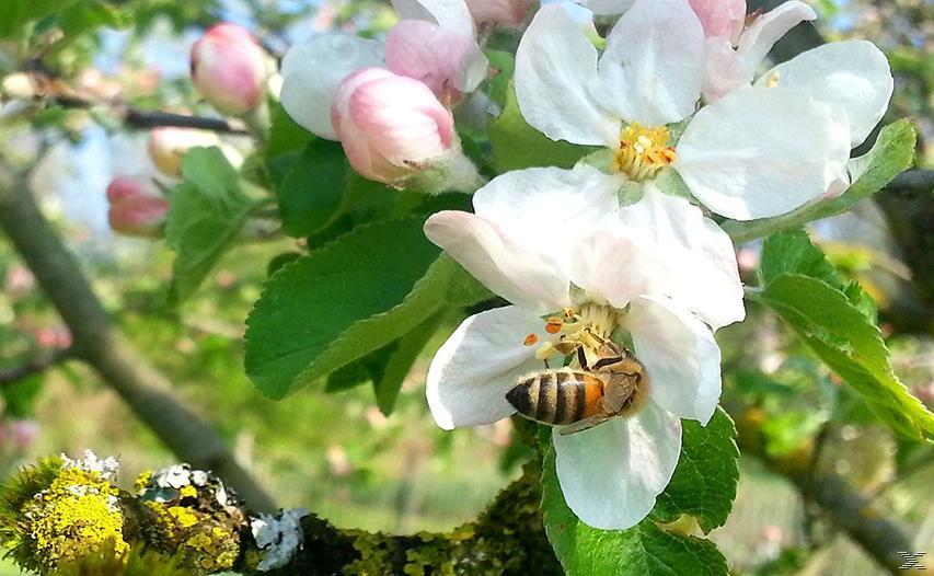 Wildbienen und Schmetterlinge - (DVD)