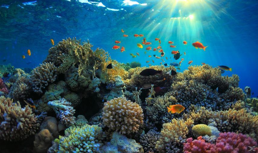 Abenteuer Korallenriff 3D - Die Unterwasserwelt Ägyptens - (3D Blu-ray)