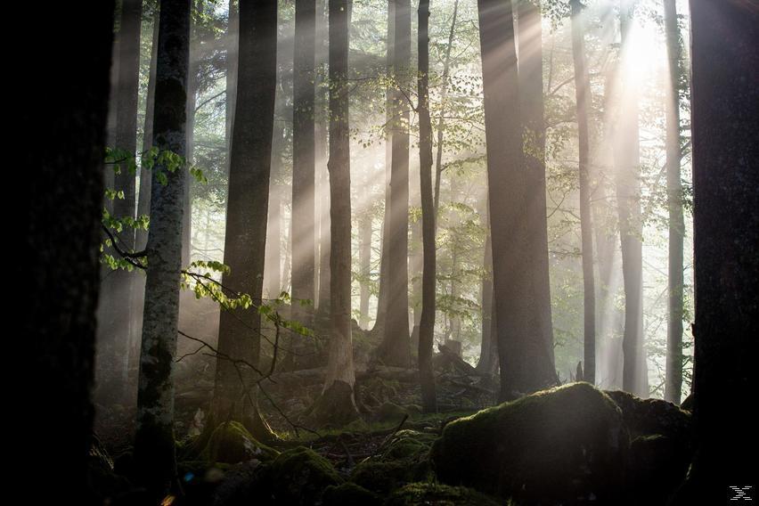 Zurück zum Urwald - Der Nationalpark Kalkalpen - (Blu-ray)