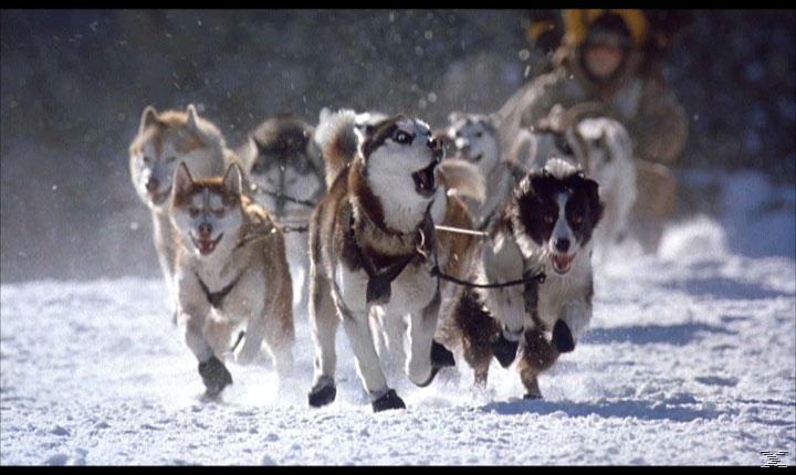 Snow Dogs - 8 Helden auf 4 Pfoten - (DVD)