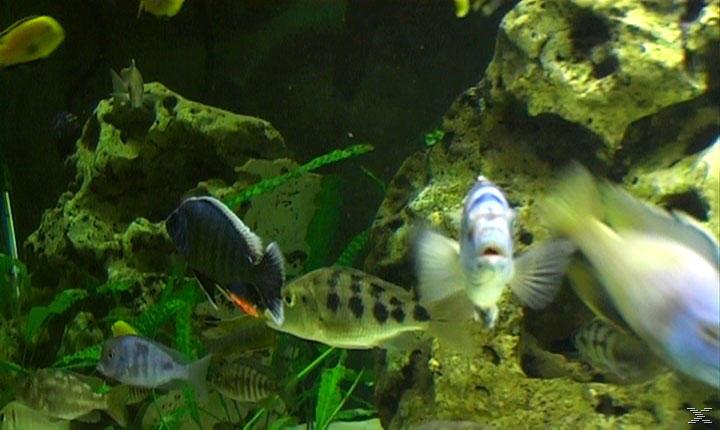 Aquarium Impressionen [DVD]
