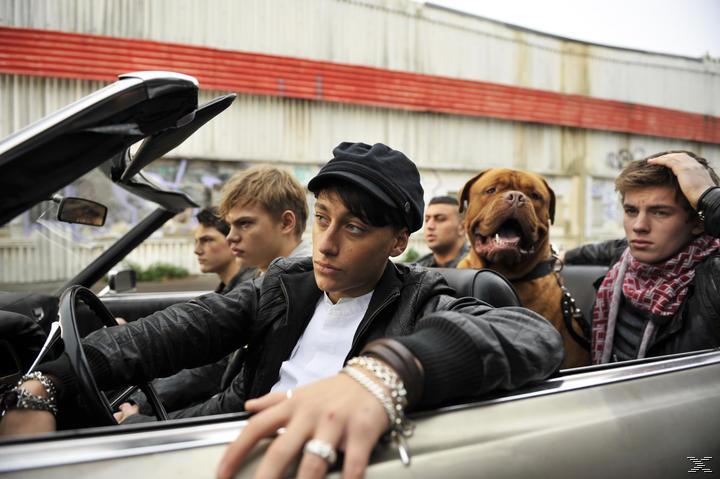 Gangs - (DVD)