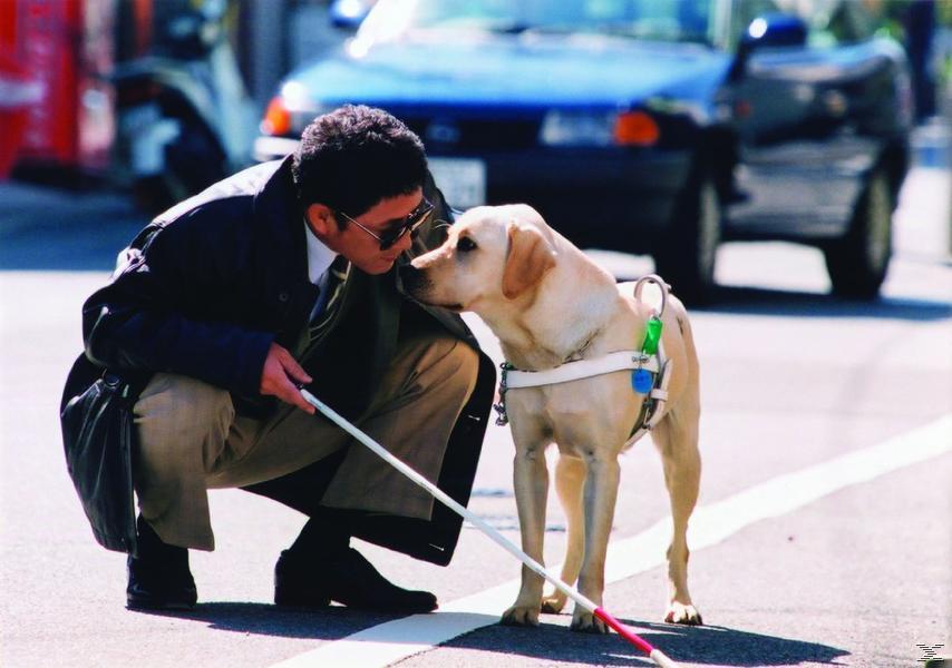Die schönsten Hundefilme (Quill, Smitty, Boule & Bill) - (DVD)
