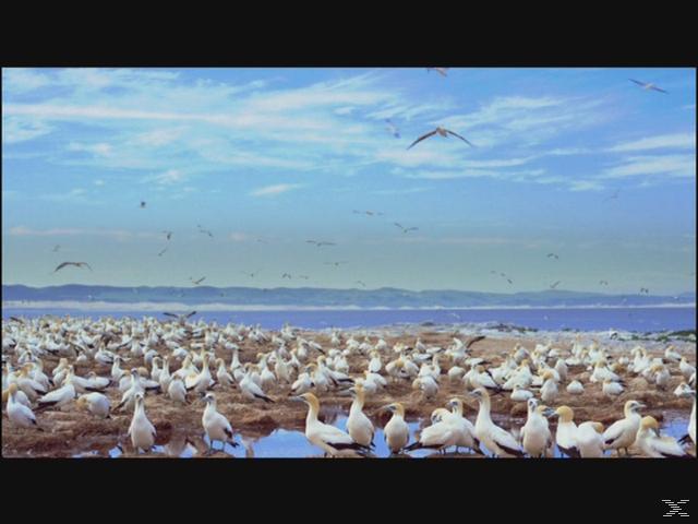 IMAX: Wild Ocean 3D [3D Blu-ray]
