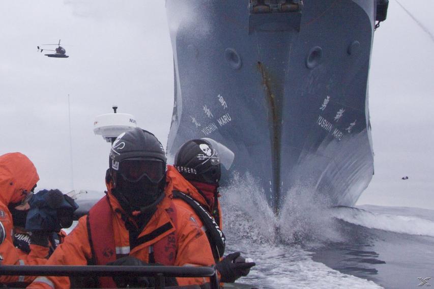 Whale Wars - Krieg den Walfängern - Staffel 5 - (DVD)