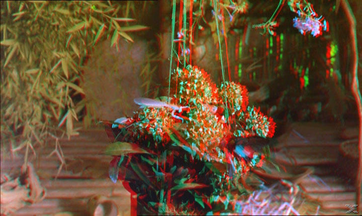 Bugs! - Abenteuer Regenwald - Real 3D [3D Blu-ray]