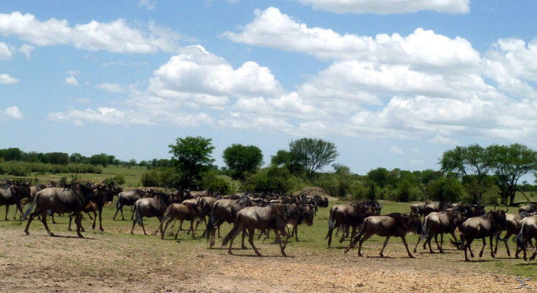 Serengeti , Wächter der Wüste - (DVD)