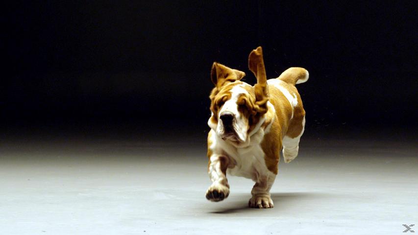 Faszination Hund - Unser Partner mit dem sechsten Sinn [DVD]