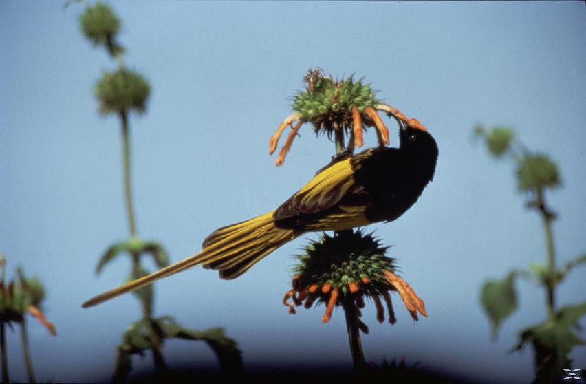 Das Leben der Vögel [DVD]