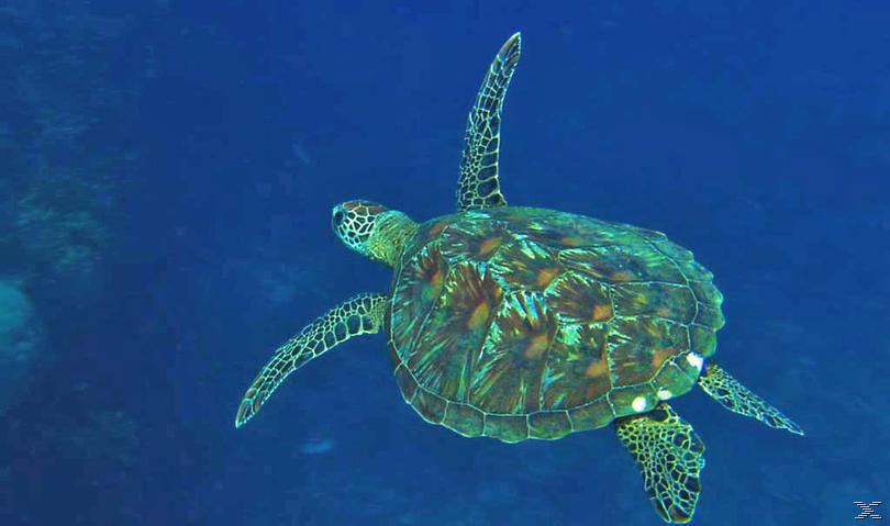 Haie 3D / Delfine und Wale 3D / Wunderwelt Ozeane 3D - (3D Blu-ray)